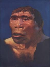 Rekonstruksi  pithecanthropus berdasarkan fosil tengkorak yang ditemukan.