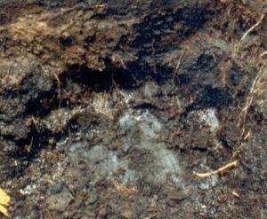 Organosol