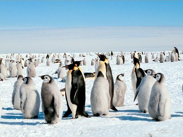 Keluarga Penguin